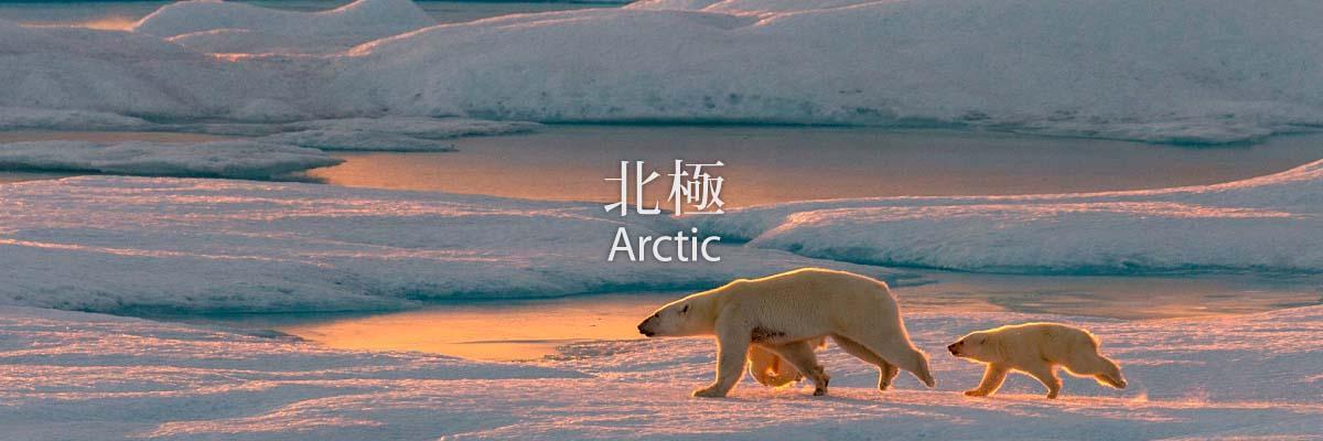 banner_arctic_2.jpg